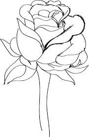 Znalezione obrazy dla zapytania rose