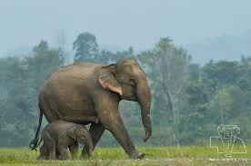 Six Facts About <b>Baby Elephants</b> - Blog