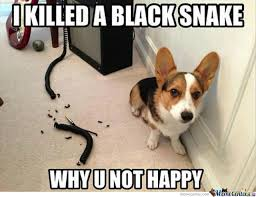 Black Snake Moan Memes. Best Collection of Funny Black Snake Moan ... via Relatably.com