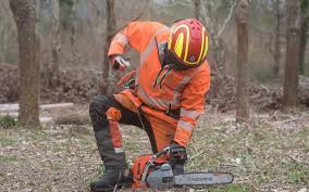 Using a Chainsaw on the <b>Farm</b> – What You Need to Know | Lantra ...