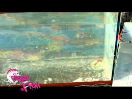 <b>CRAZY FISH VIBRO</b> WORM - YouTube