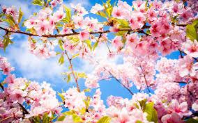 """Résultat de recherche d'images pour """"le printemps arrive"""""""