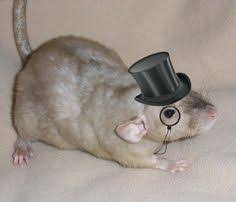 Image result for rat in clothes