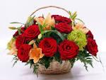 Images & Illustrations of basket flower