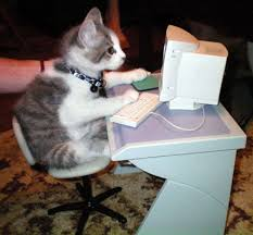 Image result for kitten on computer