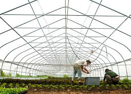what is organic farming and and benefits of organic food    organic farming using organic waste