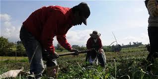 Marco para el fomento de la Economía Solidaria en territorios rurales de Colombia
