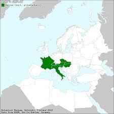 Fritsch-Segge – Wikipedia