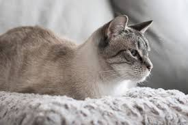The Best <b>Cat Beds</b> (According to Our <b>Cats</b>): Reviews by Wirecutter
