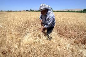 IS Threatens '<b>Hot Summer</b>' by Scorching Iraq, Syria Farmlands ...