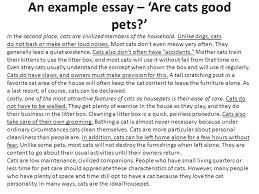 my pet cat essay for grade    reportthenewswebfccom my pet cat essay for grade