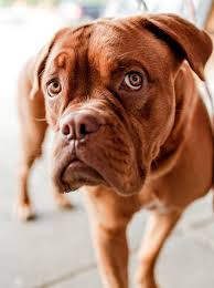 cats n dogs kittens n puppies cute curious brown boxer doggy