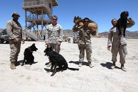 u s department of defense photo essay military working dog handlers assigned to the 1st law enforcement battalion i marine expeditionary force