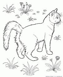 essay free coloring pages of cat and rat course tabby cat   essay free coloring pages of gray tab cat