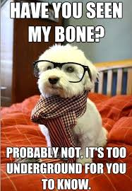 hipster dog meme - have you seen my bone - Daily Picks and Flicks via Relatably.com