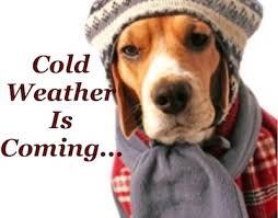Image result for cold weather images
