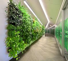 wall of plants brings natural benefits under artificial light via malodorous subways to your industrial chic amazing office plants