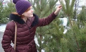 <b>Елка</b>, <b>пихта</b> или сосна: каким новогодним деревом украсить дом ...