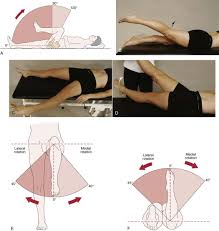 hip clinical gate figure 11 8 active movements of the hip a flexion b extension c abduction d adduction e rotation in the supine position f rotation in the prone