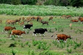 Image result for taman nasional alas purwo banyuwangi