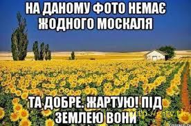 Порошенко официально внес в Раду представление об увольнении Шокина - Цензор.НЕТ 4393