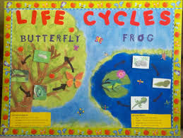 1000 images about science bulletin board ideas on pinterest bulletin boards science bulletin board and spring bulletin boards bulletin boards