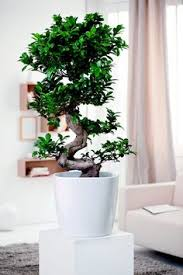 feng shui plants improve indoor air and create a comfortable atmosphere at home and in the office how can you create a positive flow of energy in your home add bonsai office interior