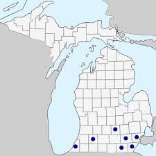 Silphium perfoliatum - Michigan Flora