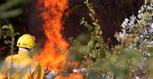 Vila Nova de Cerveira investe 145 mil euros na prevenção de fogos