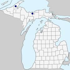 Holcus mollis - Michigan Flora