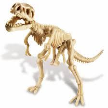 תוצאת תמונה עבור שלדים של דינוזאורים