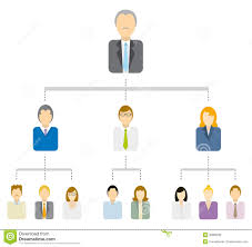 hierarchical tree diagram   business structure royalty free stock    hierarchical tree diagram   business structure