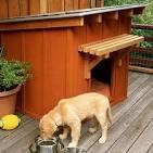Doghouse Fifty [Doghouse]