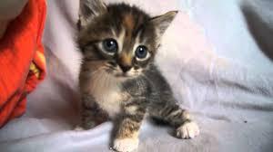Cửa hàng mua bán thiết bị định vị cho mèo giá rẻ ở sài gòn
