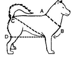 measuring for a harness on different dog harnesses