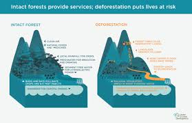 a tale of two rainstorms the science of tropical forests center in contrast the river flowing out from the deforested landscape has more pollutants and more sediment sediment in turn reduces reservoir capacity behind