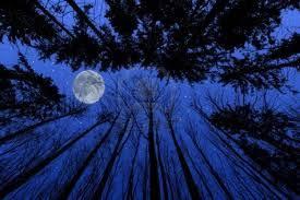 Risultati immagini per bosco di notte