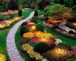 Fleurs du jardin : conseils de culture et entretien - Binette Jardin