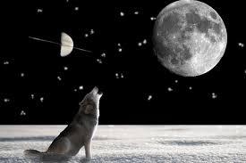 Resultado de imagen de fotos de lobos