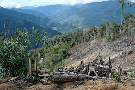 essay on deforestation and its impact on environment