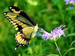 لكل محبي صور الطبيعة  اكبر تجميع لصور الطبيعة Images?q=tbn:ANd9GcTBCVP2TQE_NRt4HM2OAKcl6rDx-I4wschmK2bUVQ3lsH9m-6n8