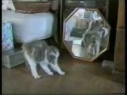 Веселый <b>кошачий рок</b>-н-ролл!!! - YouTube