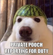 Private Pooch - Mad About Memes via Relatably.com