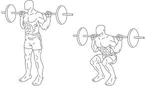 <b>Squat</b> (exercise) - Wikipedia