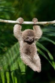 sloth க்கான பட முடிவு