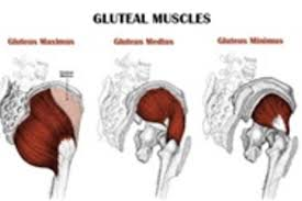 glute strength the key to preventing injury building power glute strength the key to preventing injury building power strength