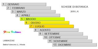 Ballota frutescens [Cimiciotta spinosa] - Flora Italiana