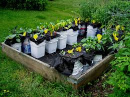 Small Picture Vegetable Garden Irrigation System Raised Bed Snipndrip Soaker