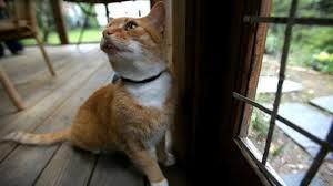 Watch: How Far Do Your Cats Roam?