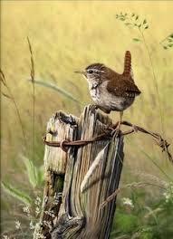 ArtBack <b>hot</b> 4 style sparrow diy 5d diamond painting bird <b>animal full</b> ...